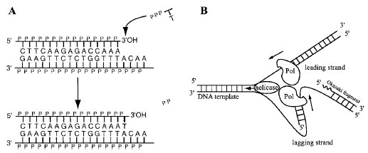 | Molecular and Cell Biology | Biocyclopedia.com