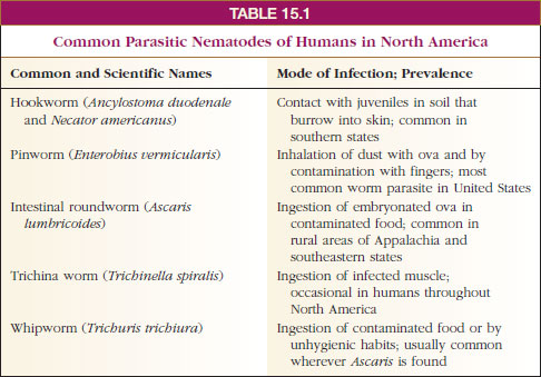 classify ascaris from phylum to species