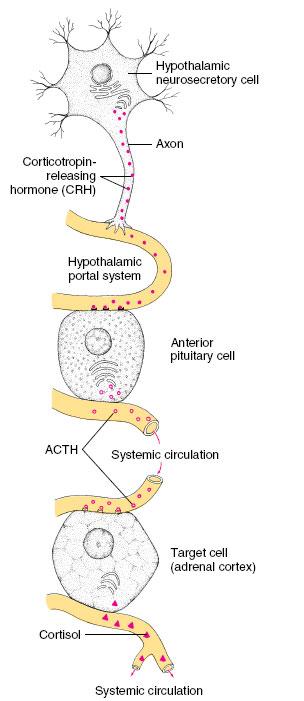 Vertebrate Endocrine Glands and Hormones | Chemical Coordination ...