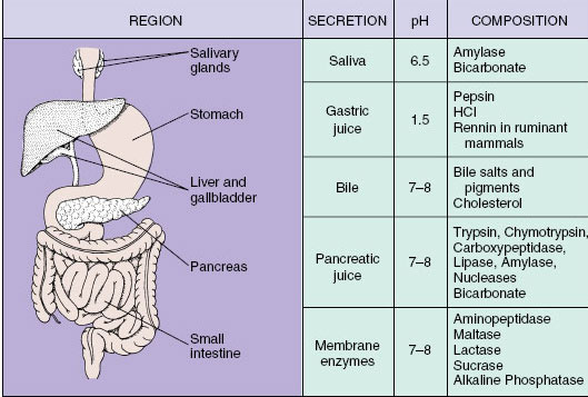 Region Of Terminal Digestion And Absorption  The Intestine