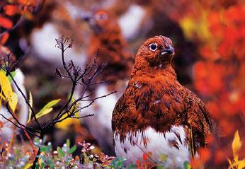 Changing Color Avoiding Danger Animal Defense Mechanism
