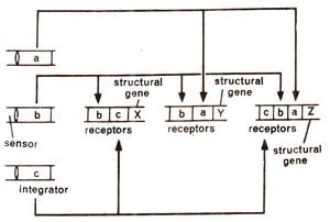 britten davidson model of gene regulation ppt
