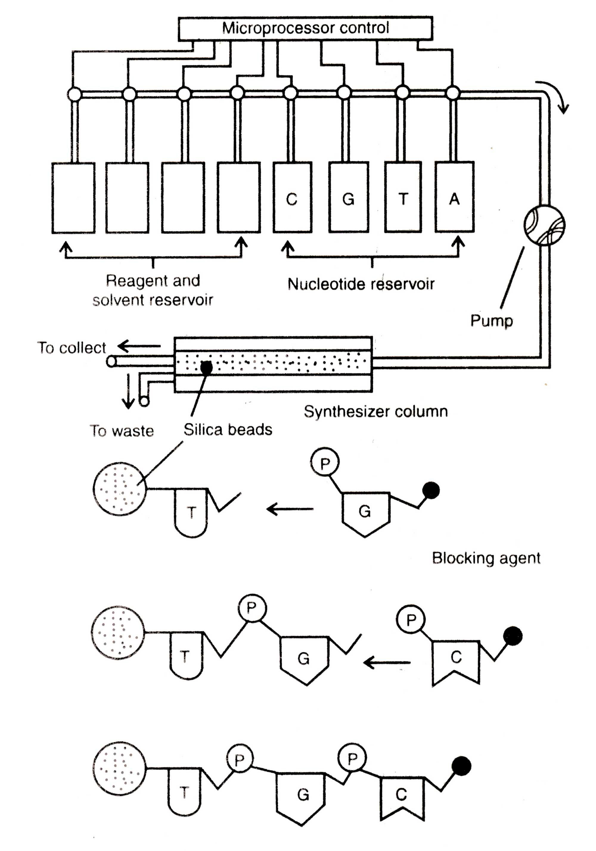 Gene Machine - Gene Technology