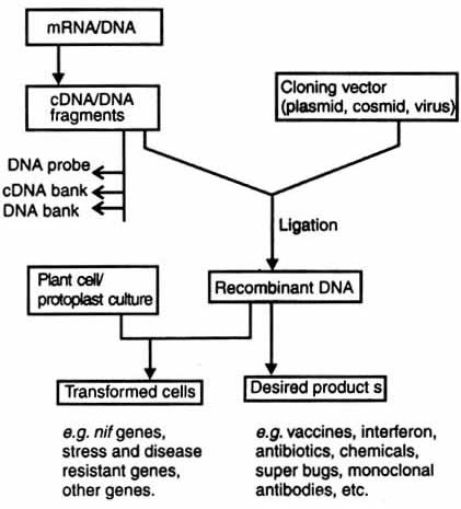 Genetic Engineering For Human Welfare Biocyclopedia