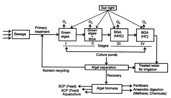 Production of algal biomass single cell protein scp for Design criteria of oxidation pond