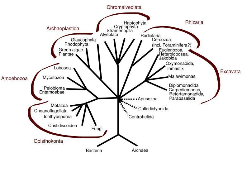 eukaryote    eukarya