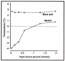 Mulch cools air temperature above ground.