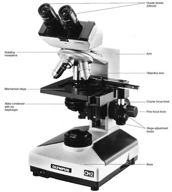 The compound microscope and its parts.