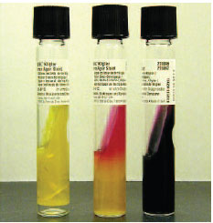 Colour Plates | Microbiology Methods | Botany ...