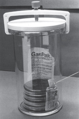 A GasPak jar (BD Bioscience) for cultures to be incubated anaerobically. In this model, the tight-fitting lid contains a catalyst. The large foil envelope has been opened to receive 10 ml of water delivered by a pipette. With the lid clamped in place, hydrogen generated from substances in the large envelope combines with oxygen in the jar's atmosphere. This combination is mediated by the catalyst and forms water, which condenses on the sides of the jar. Carbon dioxide is also given off by the substances within the large envelope, contributing to the support of