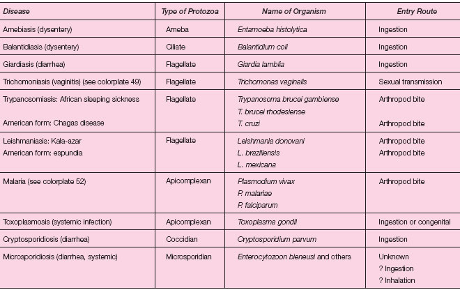 Protozoa And Animal Parasites Microbial Pathogens Requiring