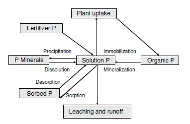 Phosphorus cycle in agricultural soils.