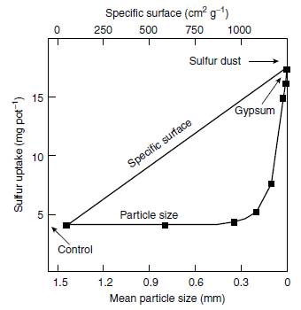 Sulfur uptake of maize plants 32 days after sowing, in relation to particle size and specific surface of elemental sulfur in a pot experimen
