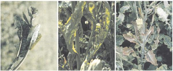 Plant Nutrient | Essential Elements - Macronutrients