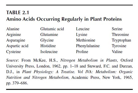 Amino Acids Occurring Regularly in Plant Proteins