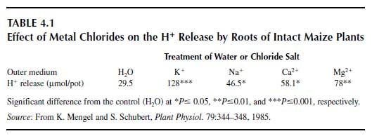 Effect of Metal Chlorides on the H Release by Roots of Intact Maize Plants