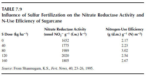 Influence of Sulfur Fertilization on the Nitrate Reductase Activity and N-Use Efficiency of Sugarcane