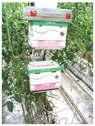 Figure 10.5 Bumble-bee boxes provided in glasshouse for pollination of tomatoes