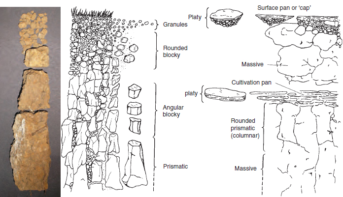 Figure 17.13 Soil structures. The soil profile on the left is composed of soil particles aggregated into structures that produce good growing conditions. Examples of structures that create a poor rooting environment are shown in the profile on the right.