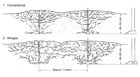 Figure 17.16 Subsoiling . The subsoiler is drawn through the soil to burst open compacted zones. It leaves cracks which remain open to improve aeration, drainage, and root penetration. The cracks created should link up with artificial drainage systems unless the lower layers are naturally free draining