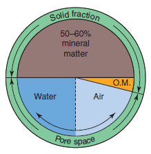 Figure 17.2 Composition of a typical cultivated soil. The solid fraction of the soil is made up of mineral (50–60 per cent) and organic (1–5 per cent) matter. This leaves a total pore space of 35–50 per cent that is filled by air and water, the proportions of which vary constantly.