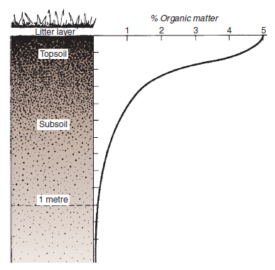 Figure 18.5 Distribution of organic matter in an uncultivated soil. Organic matter content of soil decreases from the soil surface downwards. Note that the topsoil is significantly richer in humus, which gives it a characteristically richer in humus, which gives it a characteristically darker colour